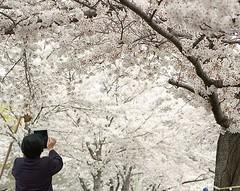(Alex youno) Tags: 120mm kodakfilm pentax6x7 filmphoto japantravel