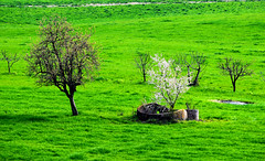_DSC1005-2_tonemapped (Patx977) Tags: travel trees italy color tree green grass landscape outside spring nikon colorful italia outdoor hill hills piemonte hdr springtime travelphotographer landscapephotographer streamzoofamily