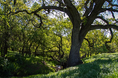 Creek - Rolling Hills Open Space Park - Solano County - California - 26 March 2016 (goatlockerguns) Tags: california park county trees usa mountains west tree nature coast oak open natural space unitedstatesofamerica vacaville hills trail bayarea eastbay solano rolling fairfield vaca
