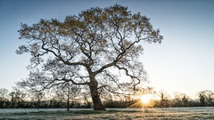 2016 Eades Meadow April - Sun's Rays (Birm) Tags: morning blue trees light sky sunlight green field grass sunrise dawn oak frost meadow frosty worcestershirewildlifetrust eadesmeadow