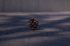 _DSC3392 (Simply Angle) Tags: street washington spring spokane pinecone washingtonstate riverfrontpark spokanewa canonfd a7ii canonlens sonyphotographing sonyphotography canonfd100mmf4macro sonya7ii ilce7m2