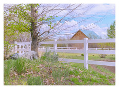 Pastels (Dave Heise) Tags: city tree barn fence carson spring pastel nevada canvas