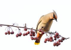 (Mehrdad Mir) Tags: color bird spring minimal telephoto