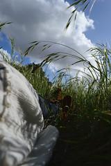 Wonderland. (k00k00kachoo) Tags: nature grass clouds nikon dream meadow wanderlust adventure breathe wonderland