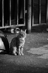 Wild. (KireevI) Tags: poverty life street light wild urban cats abandoned nature animals fur mammal outdoors garbage feline solitude sitting tabby gray young dump dirty luck asphalt tramp rejection unhygienic cruel adversity