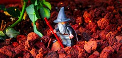 I met a traveller from a Fantasy land (BrickSev) Tags: plant leaves rock toy toys photography leaf rocks lego outdoor earth lord lotr rings fantasy gandalf lordoftherings middle hobbit middleearth thehobbit minifigure the thelordoftherings minifigures toyphotography legophotography legolotr legomiddleearth