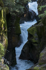"Avalanche Creek through Avalanche Gorge • <a style=""font-size:0.8em;"" href=""http://www.flickr.com/photos/63501323@N07/26577740975/"" target=""_blank"">View on Flickr</a>"