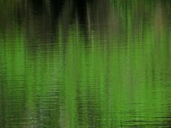 The Greening of Spring (Keith Michael NYC (1 Million+ Views)) Tags: nyc newyorkcity ny newyork centralpark manhattan