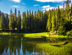 lake among the conifer forest-130620 (M. Pellinni) Tags: park wood morning travel blue summer sky cloud lake reflection tree green nature water beautiful beauty grass forest river landscape pond outdoor hill scenic rocky peaceful scene clear idyllic tranquil dropbox conifer synevir ifttt