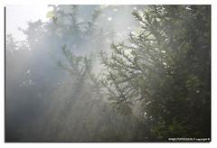 Oasi-S.Alessio-25-04-2016_007 (fdpdesign) Tags: italy macro nature nikon natura animali d800 pavia oasi 2016 salessio nikon105micro