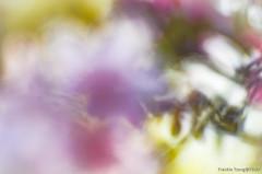 DSC_8544 (Frankie Tseng ()) Tags: park pink flowers sunset sky bw flower silhouette photography 50mm blackwhite nikon outdoor flash sunny tokina cherryblossoms fade nikkor 70300mm tamron 90mm f8 1224mm f28 f4 1870mm bwphotography blackwhitephotography portraitphotography outdoorportrait sb900 yongnuo outdoorportraitphotography yn568