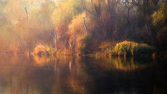 Autumn reflection (Pásztor András) Tags: autumn trees red reflection green art reed nature water yellow forest painting photography nikon colorful hungary mood fine swamp nikkor leafs 1870mm calmness landscap brows andras pasztor d5100