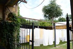 DSC_0168 (mariadlirio) Tags: limpieza lavado toallones