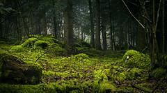 ct sombre (anarchitecte) Tags: wood winter green rain forest dark landscape schweiz switzerland nikon suisse outdoor hiking hiver pluie vert sombre paysage tamron wald extrieur regen fort bois calme mousse randonne humide 2470mm28 d7100