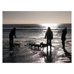 160210-042 (Steve Thearle) Tags: dog beach mono coast seaside play compton isleofwight iow dmcgh1 iowight
