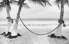 Horizon_GM_1 (GT Art Photo Agency) Tags: panorama palms sand horizon cable rope link palme spiaggia gianni sabbia orizzonte corda unione legame maffi gtart giannimaffi