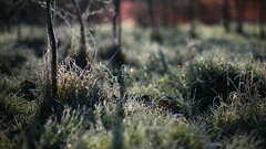 Morning Frost (V Photography and Art) Tags: morning trees winter light sunlight cold colour ice grass canon early frost dof floor bokeh circles freezing naturallight ground frosty magical lowperspective earlymorninglight colourcircles