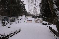 Eisbr Fiete im Zoo Rostock 23.01.2016  02 (Fruehlingsstern) Tags: vienna zoo polarbear vilma eisbr erdmnnchen fiete zoorostock geparden baumknguru canoneos750 tamron16300
