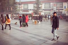 In Lhasa (Elmar Bajora Photography) Tags: china road street school people mountains art heritage temple ancient asia asien buddha buddhist strasse buddhism landmark tibet monastery tibetan remote himalaya centralasia lhasa jokhang topoftheworld tar tempel sera culturalheritage lasa gebirge barkhorsquare barkhor hochland roofoftheworld hochebene tibetplateau   songtsangampo autonomeregiontibet tibetanautonomusregion