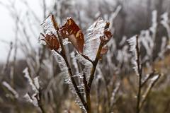 _MG_1104 (schamrock77) Tags: winter italy mountain ice freezing natura inverno montagna friuli ghiaccio galaverna canon6d 35f2is
