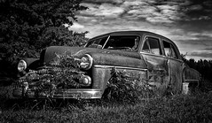 Old Rusty Dodge (b&w) (Inge Vautrin Photography) Tags: old sky blackandwhite bw plants broken monochrome rust outdoor rusty vehicle dodge arkansas oldcar