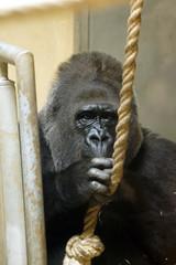 _DSC9482 (alfaluis) Tags: animal zoo pato jardim macaco tigre urso zoologico
