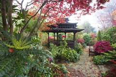 Colours of autumn in the pagoda garden (Four Seasons Garden) Tags: charity uk november flowers autumn red england colour crimson leaves garden four japanese pagoda wooden maple seasons award foliage national deciduous japonica winning walsall mahonia 2015 acers