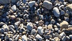 pebbles (tumpshy) Tags: texture beach seaside pebbles miscellaneous 2016 textureofnature tumpshy