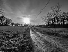 am Abend (wpt1967) Tags: bw sun sw sonne ruhrgebiet ruhrpott castroprauxel castroperholz wpt1967 fujix30