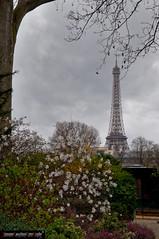 Boulevard des Invalides Tour Eiffel (frillicca) Tags: paris flower march îledefrance invalides toureiffel fiori francia marzo parigi 2015 boulevarddeinvalides