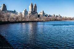 Day in the Park (Culinary Fool) Tags: nyc lake ny newyork building tree bird water path centralpark manhattan towers goose eldorado february curve 2016 centralparkreservoir culinaryfool jko jacquelinekennedyonassisreservoir brendajpederson
