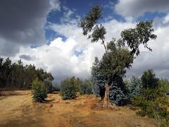 On the Mountain at Kebena