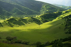 How Green Was Round Valley (Tony P Iwane) Tags: macro green landscape cattle cows hills eastbay brentwood grazing ebrpd contracostacounty roundvalleyregionalpreserve ebrpdok