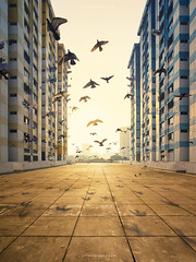 Swift Birds of Passage (rh89) Tags: morning light urban orange sun bird against birds yellow skyline backlight sunrise dawn fly flying back singapore warm apartments glow cityscape view apartment angle flat pigeon board pigeons sony centre flight wide symmetry flats housing blocks block backlit lit fe rise hdb development select rochor 1635 flew flown 1635mm a7r
