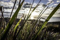 Sunrise through the scrub #1, Bicheno (kris.mccracken) Tags: au australia tasmania bicheno tasmaniaseastcoast krismccracken