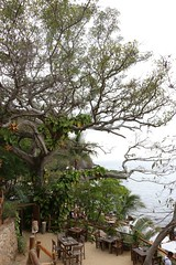 As wise as a tree (jorgmoralesr) Tags: ocean trees tree landscape mexico restaurant jalisco oceanview sightseen