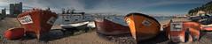 Queens of bivalves (Pietro Faccioli) Tags: ocean winter sea sunlight fish beach portugal port river coast harbor boat fishing sand afternoon harbour sunny atlantic estuary shore shellfish tagus pietro almada fishery bivalve trafaria shellfood faccioli pietrofaccioli