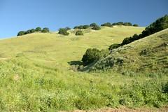 Brushy Peak Green Hills (jeffmgrandy) Tags: landscape hiking hills livermore altamont brushy