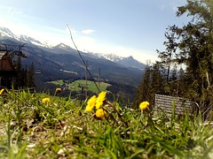yellow flowers against the mountains (Ryuu) Tags: flowers houses mountains tree green grass yellow clouds buildings landscape wooden spring focus dof horizon perspective bluesky skilift build slope dandelions tatras mountainrange yellowish tatramountains woodenarchitecture lowpov maeciche
