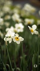 Planar 85mm 1.4 (Ney Bokeh) Tags: flowers dof bokeh 85mm mf cy planar carlzeiss