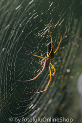 Argentinien_Insekten-87 (fotolulu2012) Tags: tierfoto