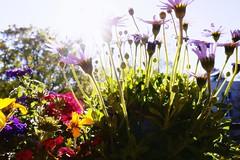 Auf Regen folgt Sonnenschein (nafoto!) Tags: sonnenschein leicaq
