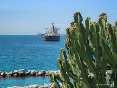Green (NIKOZAR (Nicola Zaratta)) Tags: europa ficodindia italia olympus nave puglia taranto olympusm14150mmf4056ii em10markii