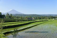 Rgion de Munduk (Claude-Olivier Marti) Tags: bali indonesia asia asie indonsie munduk