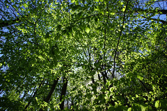 full of Summer (FarbenfroheWunderwelt) Tags: trip trees summer plants green nature up leaves forest canon natur grow grn 1018 wald farn