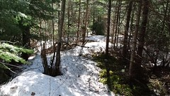 trail to creek 4-22-16 (photo synth) Tags: broken trails cleanup oops oof cleaningup heavysnow brokenbranches trailtothecreek bentandbroken