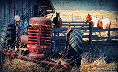 Horse Power (sminky_pinky100 (In and Out)) Tags: old travel horses tractor canada tourism barn rural fence outdoors crossprocessed novascotia postcard scenic rusty textures lanscape omot cans2s