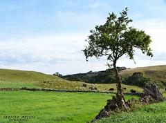 #field#field landscap#landscape tre#tree #Photograph rea#read #field #arvore #paisagem #lidanocampo #campo (juninho.melos) Tags: tree field landscape paisagem read photograph campo arvore tre rea landscap lidanocampo