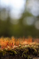 Moss (Role Bigler) Tags: nature forest moss spring bokeh natur wald moos eveninglight frhling botanik abendlicht bokehlicious canoneos5dsr tamronsp45mmf18divcusd