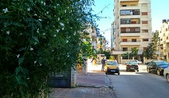 (nesreensahi) Tags: street flowers trees sky sun cars jasmine syria siria  syrie latakia